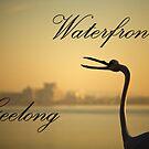 Waterfront Geelong by Jack Jansen