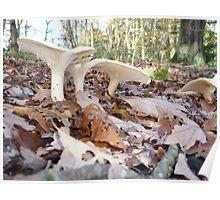 fungi shrooms woodland forage Poster