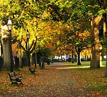 Autumn in Salem Commons by Monica M. Scanlan