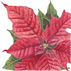 Poinsettia by Maureen Sparling