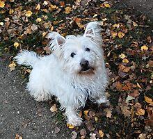My dog crumb-4 by trainmaniac