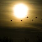 Sandhill Cranes at Bosque del Apache by TheBlindHog