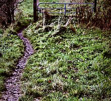 typical farm gate NI style ..... access to the left or right of gate ! by SNAPPYDAVE