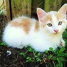 Cute lil' Kitten by Bronwyn Day