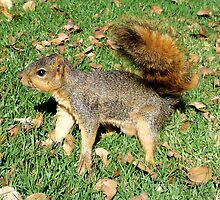 Fearless squirrel by daffodil