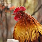 Rooster by Milos Markovic