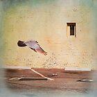 Angel by Kevin Bergen
