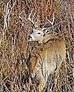 deer camouflage by Rodney55