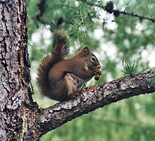 Squirrel magic, Edmonton, Alberta, Canada by Adrian Paul