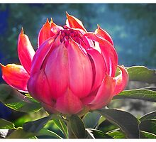 Beauty unfolding by Elaine Game