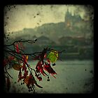 Prague Flower by sephoto