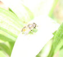 Hunny Fly/Bee by Emma Delladio