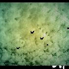 Birds of the sky by sephoto