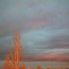 sunrise reflections by dianalynn