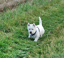 My dog crumb-12 by trainmaniac