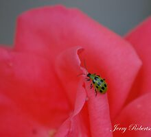 Spotted Cucumber Beetle by zpawpaw
