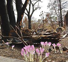 Bushfire new growth by Gerard Rotse