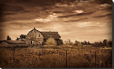 Barn and abandoned Vineyard by (Tallow) Dave  Van de Laar