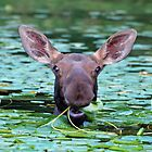 moose salad bar II by Rodney55