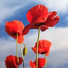 red poppies and blue sky by nordvil