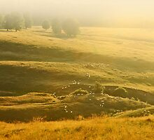Herd of sheeps on the sunset hill. by demigod