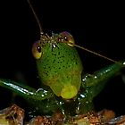 Curious Katydid by main1