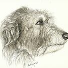 Irishwolfhound Ink 11x14 by Charlotte Yealey