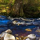 River Cover by Trevor Kersley