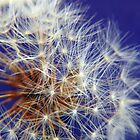 Dandelion against the Blue Sky by PurelyPrime