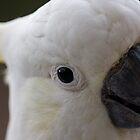 Australian Cockatoo Macro by PurelyPrime