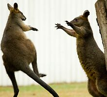 Ninja Wallabies! by PurelyPrime