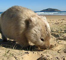 Wombat Island by RobynHButler