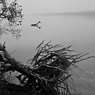 Fallen Tree in Black and White by pennyswork