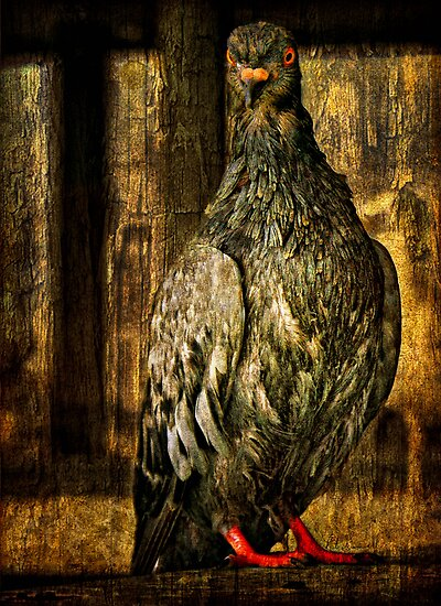 Feathered Finery by pat gamwell