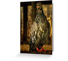 Feathered Finery Greeting Card