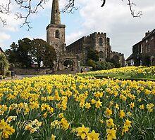 Spring Daffodils by John Keates