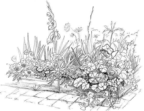 Nasturtiums in the garden by Svetlana Mikhalevich
