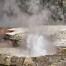 Geyser in Yellowstone NP, Wyoming by Teresa Zieba