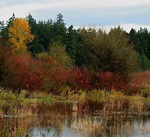 Marsh Colours by NancyR