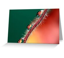 Autumn Leaf Reflections Greeting Card