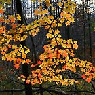 Michigan Maple by tanmari