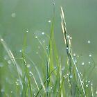 Bejewelled Grass by Helen Greenwood