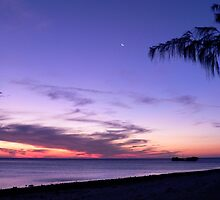 Pure Purple on Heron Island by melodyart
