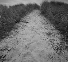 The Path Ahead by Daniel Fells