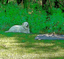White dog in shade by Tymlaird