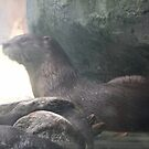 Otter in the Mist by angora998