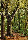 Billinge Wood by inkedsandra