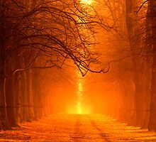 Golden Dawn - Lime Tree Avenue, Clumber Park by Doug Chinnery
