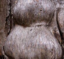 The Shape of Bark by Karen Kaleta