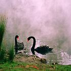 Swans,Daylesford by Joe Mortelliti